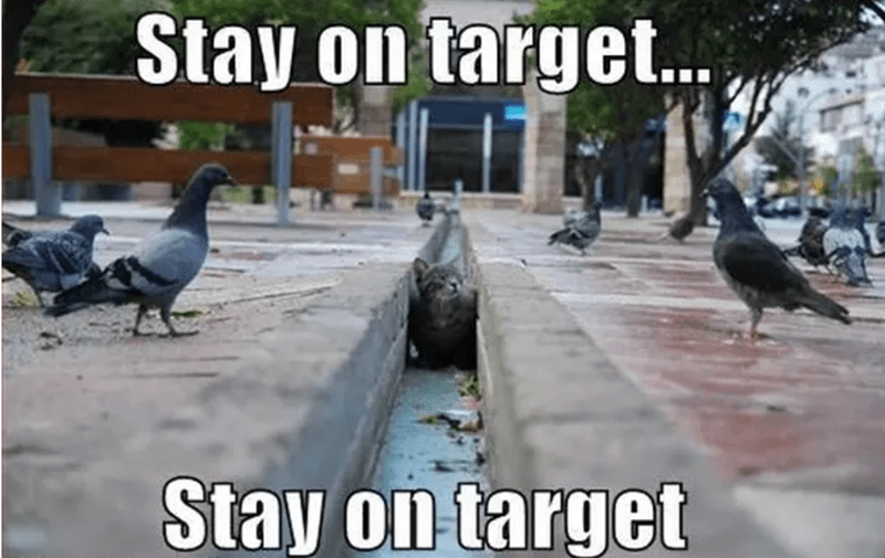 Bird - Stay on target.. Stay on target