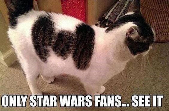 Cat - ONLY STAR WARS FANS... SEE IT