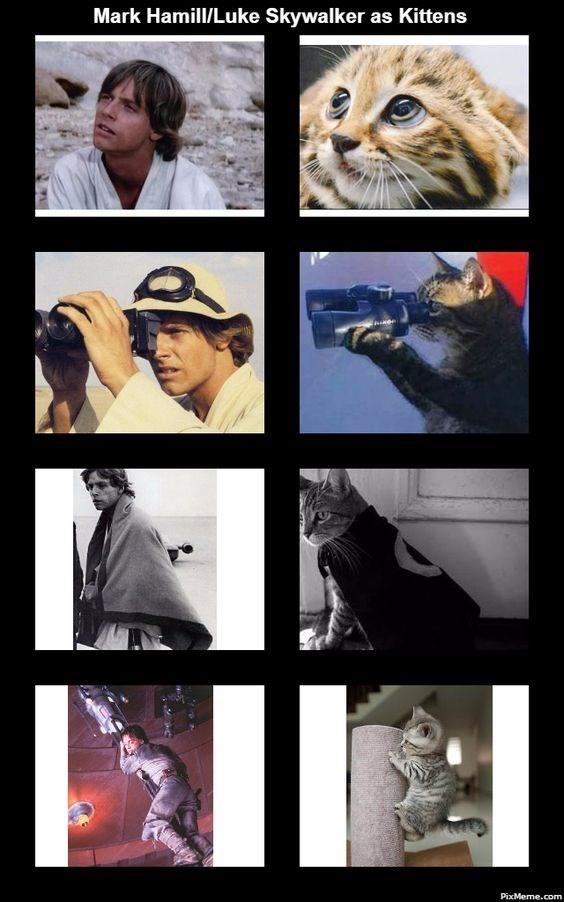 Photography - Mark Hamill/Luke Skywalker as Kittens PixMeme.com