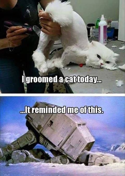 Polar bear - groomed a cattoday. .It reminded me of this.
