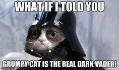 Photo caption - WHATIFITOLD YOU GRUMPY CAT IS THE REAL DARK VADER!