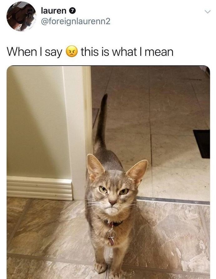 """Caption that reads, """"When I say >:( this is what I mean"""" above a photo of an angry cat"""