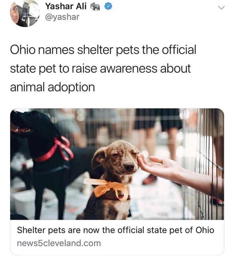 """Tweet that reads, """"Ohio names shelter pets the official state pet to raises awareness about animal adoption"""" above a photo of a cute puppy"""