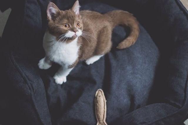 cat with mustache - Cat