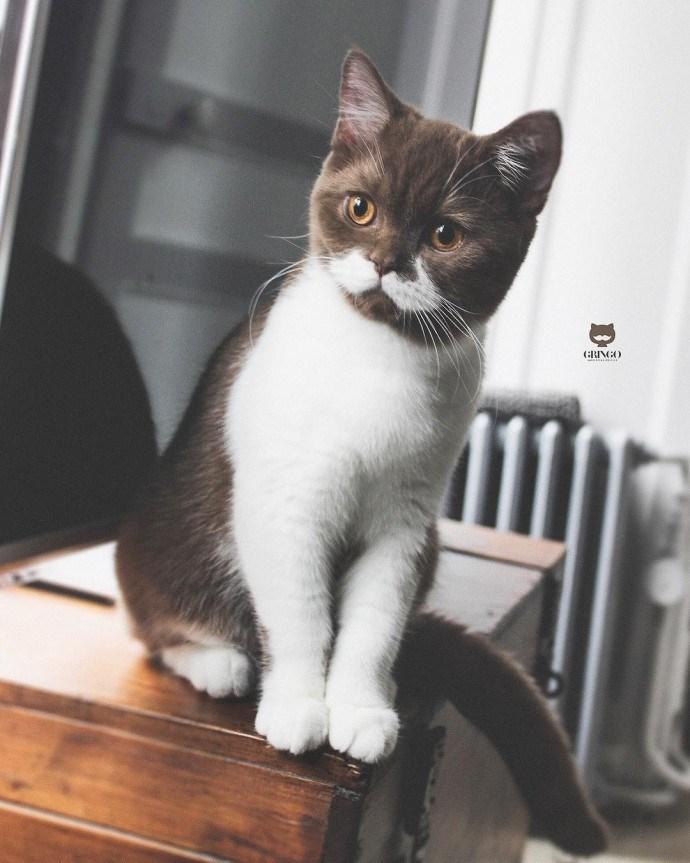 cat with mustache - Cat - RINGO
