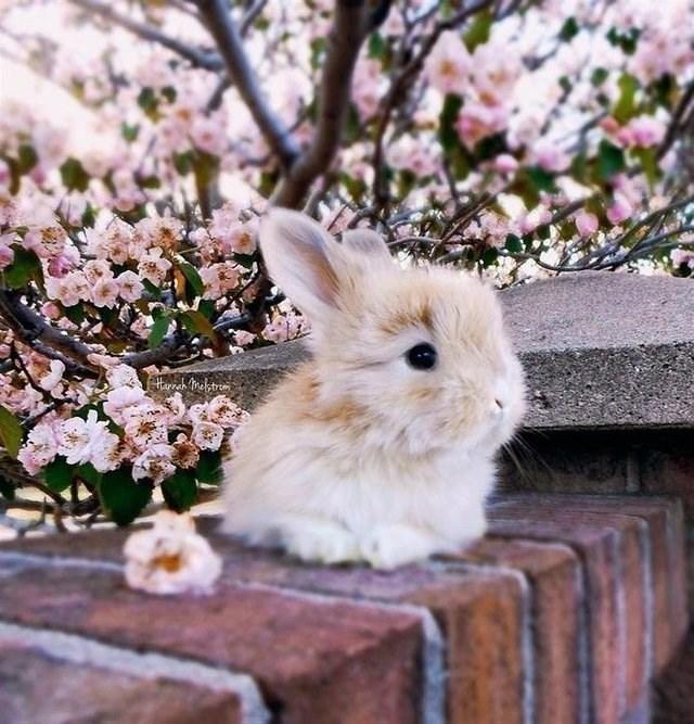 cute animals - Rabbit - horeh frah trem
