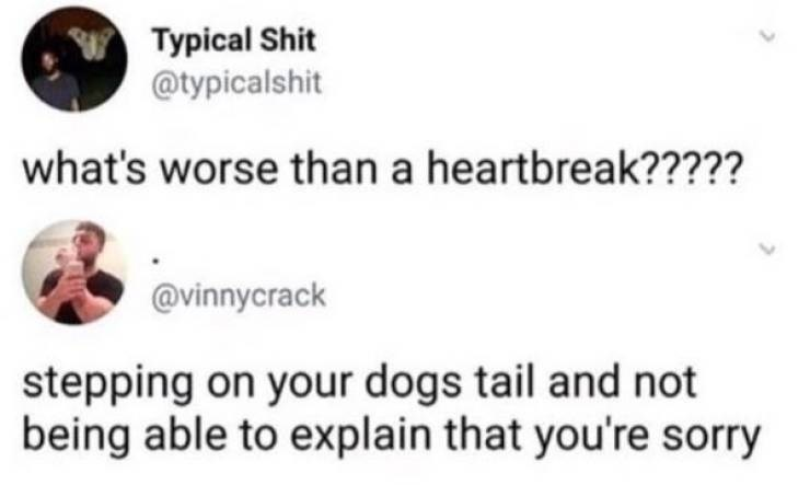 Text - Typical Shit @typicalshit what's worse than a heartbreak????? @vinnycrack stepping on your dogs tail and not being able to explain that you're sorry