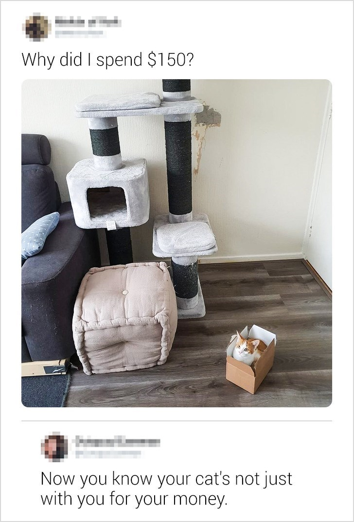 Product - Why did I spend $150? Now you know your cat's not just with you for 'your money