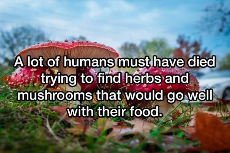 Natural landscape - A lot of humans must have died trying to find herbs and mushrooms that would go well with their food,