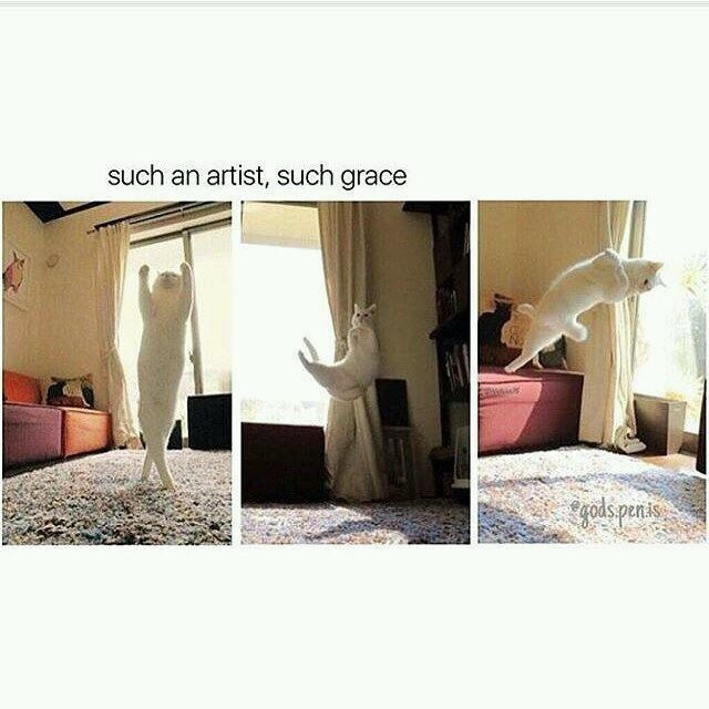 """Caption that reads, """"Such an artist, such grace"""" above photos of a cat flopping around on someone's bed"""