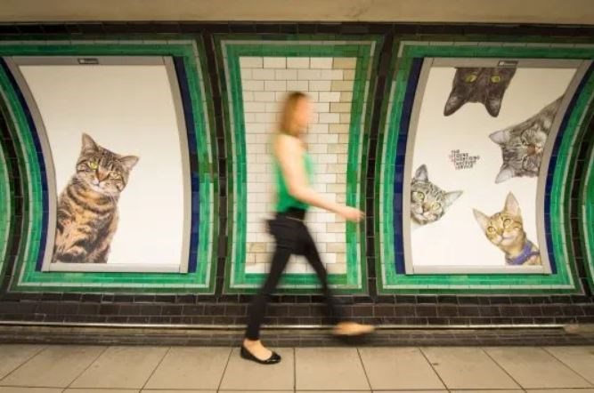 cats london clapham station