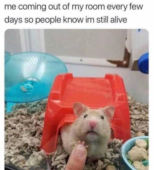 Hamster - me coming out of my room every few days so people know im still alive