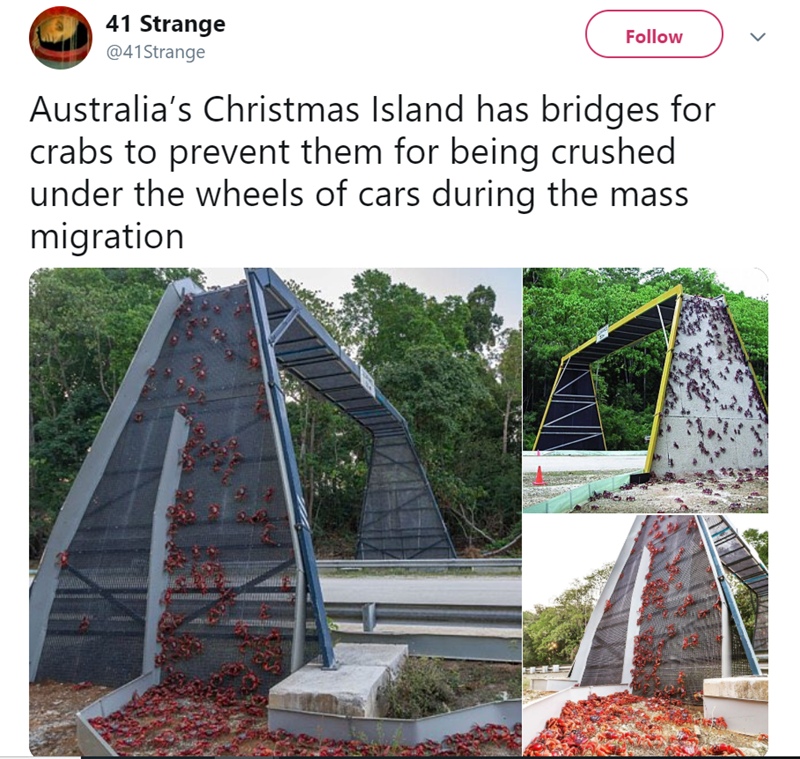 Stairs - 41 Strange Follow @41Strange Australia's Christmas Island has bridges for crabs to prevent them for being crushed under the wheels of cars during the mass migration