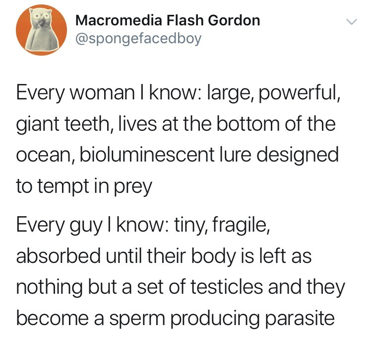 Text - Macromedia Flash Gordon @spongefacedboy Every woman I know: large, powerful, giant teeth, lives at the bottom of the ocean, bioluminescent lure designed to tempt in prey Every guy I know: tiny, fragile, absorbed until their body is left as nothing but a set of testicles and they become a sperm producing parasite