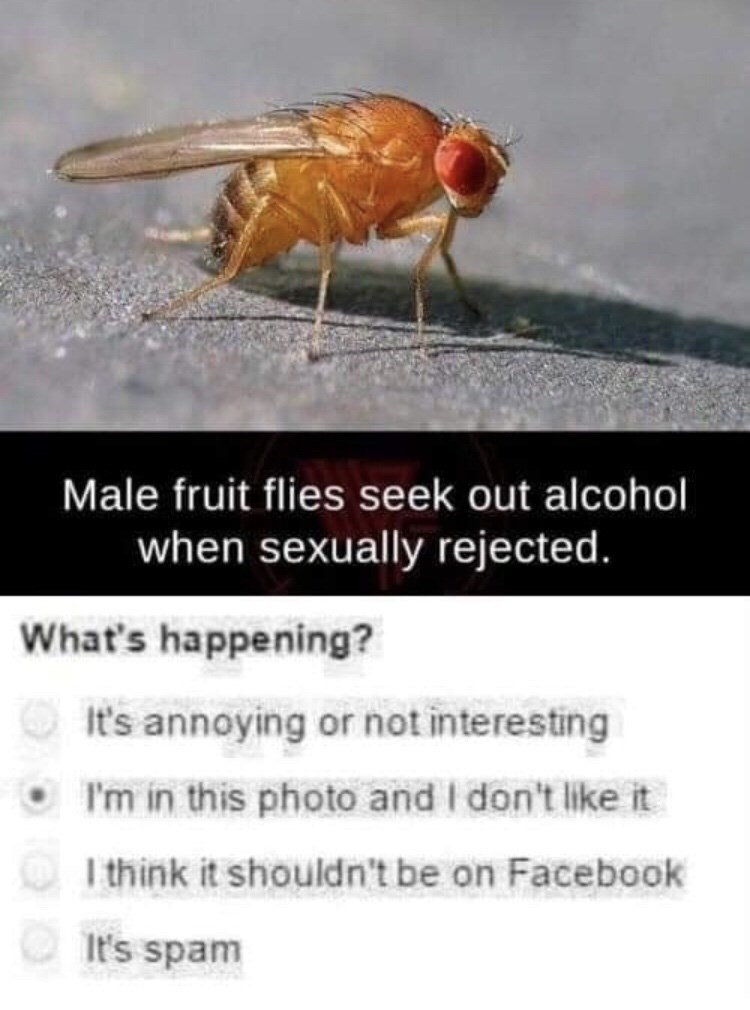 meme about a fly that drinks alcohol after getting rejected
