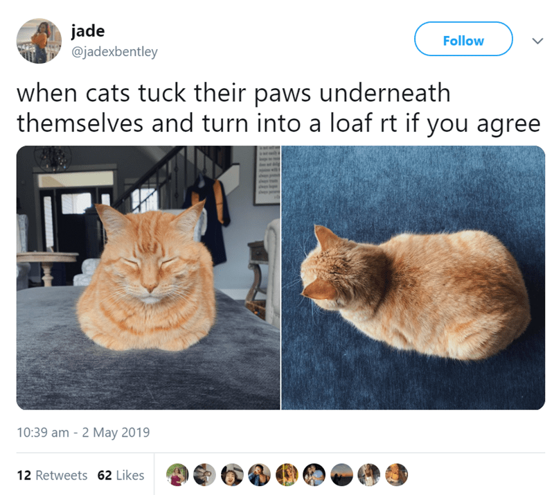 Cat - jade @jadexbentley Follow when cats tuck their paws underneath themselves and turn into a loaf rt if you agree 10:39 am 2 May 2019 12 Retweets 62 Likes