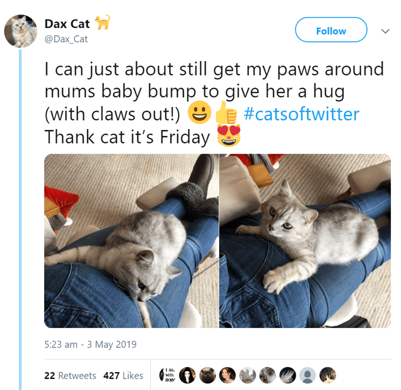 Cat - Dax Cat Follow @Dax_Cat I can just about still get my paws around mums baby bump to give her a hug (with claws out!) #catsoftwitter Thank cat it's Friday 5:23 am 3 May 2019 I St 22 Retweets 427 Likes With ROB