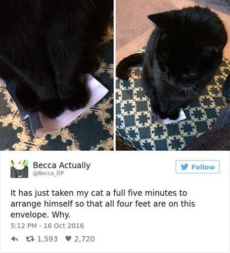 Cat - Becca Actually Becca DP Follow It has just taken my cat a full five minutes to arrange himself so that all four feet are on this envelope. Why. 5:12 PM 16 Oct 2016 t1,593 2.720