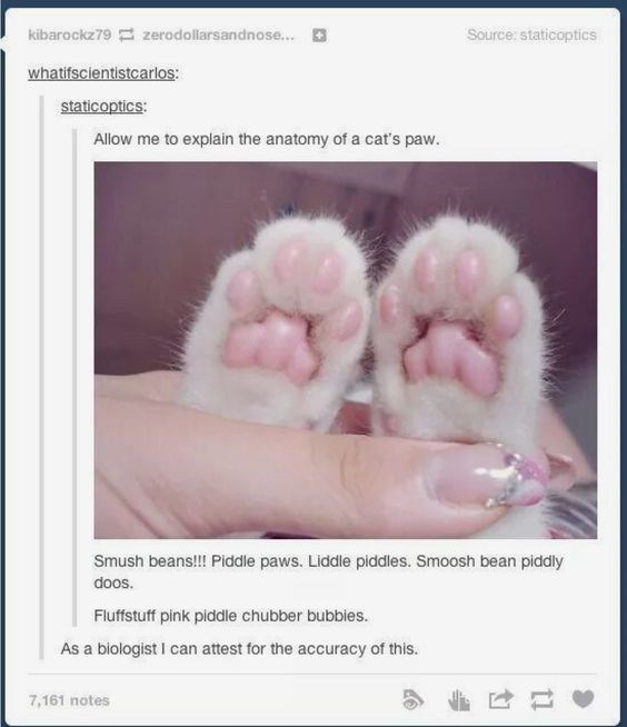 Pink - Source: staticoptics kibarockz79 zerodollarsandnose... whatifscientistcarlos: staticoptics: Allow me to explain the anatomy of a cat's paw. Smush bean!!! Piddle paws. Liddle piddles. Smoosh bean piddly doos. Fluffstuff pink piddle chubber bubbies. As a biologist I can attest for the accuracy of this. 7,161 notes