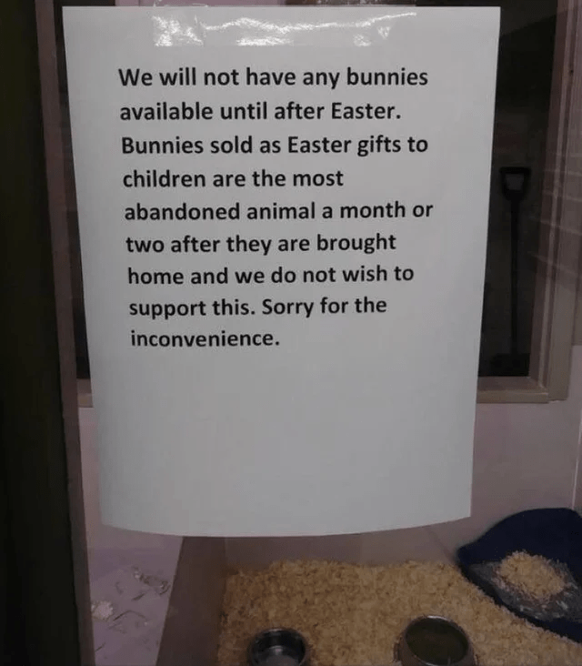 Text - We will not have any bunnies available until after Easter. Bunnies sold as Easter gifts to children are the most abandoned animal a month or two after they are brought home and we do not wish to upport this. Sorry for the inconvenience.