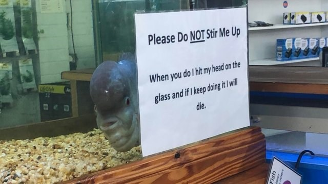Please Do NOT Stir Me Up tele When you do I hit my head on the glass and if I keep doing it I will die
