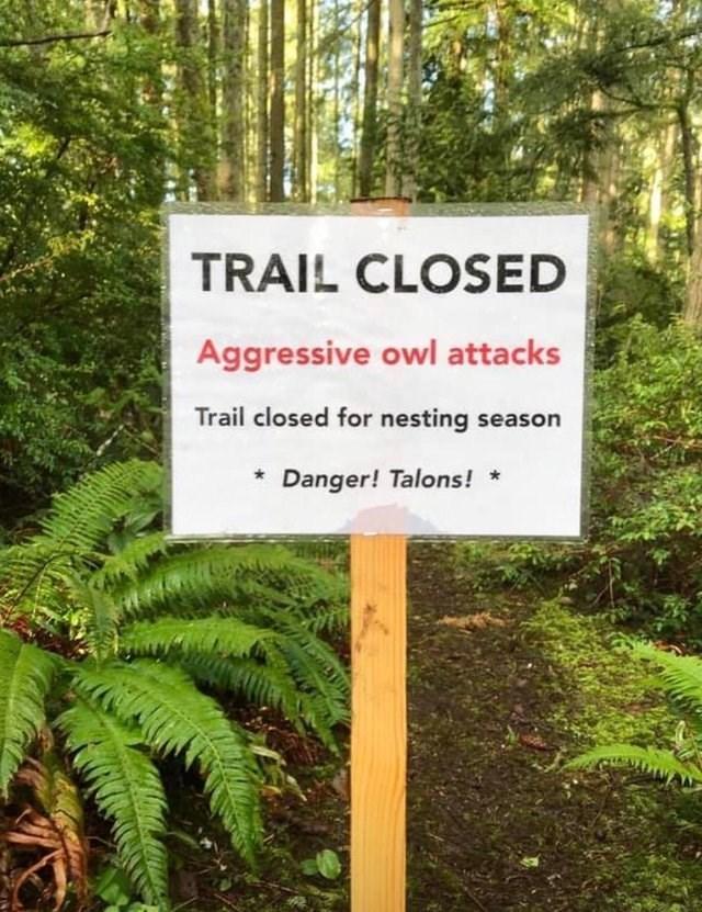 Nature reserve - TRAIL CLOSED Aggressive owl attacks Trail closed for nesting season Danger! Talons!
