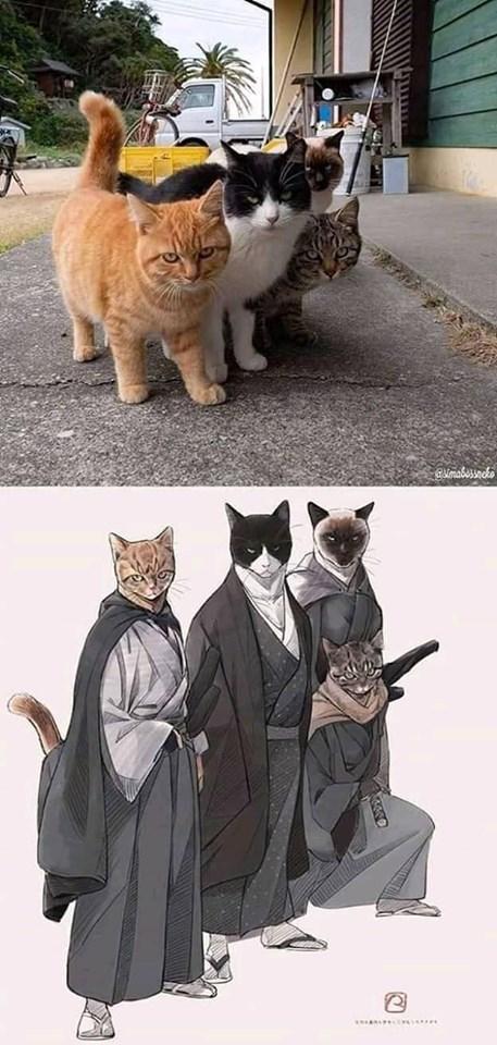 Cat - smabussaco