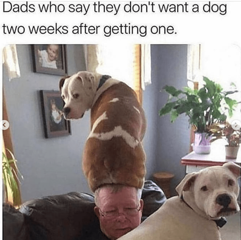 Vertebrate - Dads who say they don't want a dog two weeks after getting one.