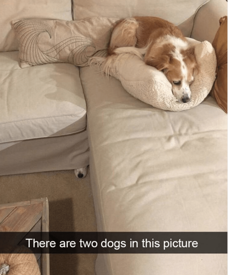 Comfort - There are two dogs in this picture