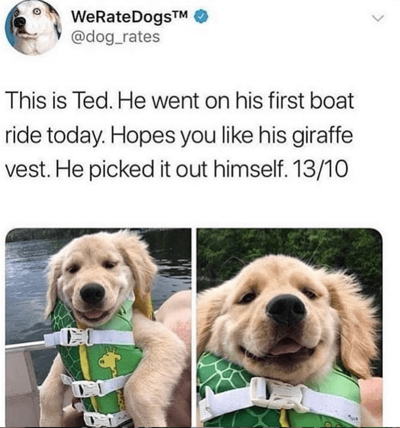 Dog - WeRateDogsTM @dog_rates This is Ted. He went on his first boat ride today. Hopes you like his giraffe vest. He picked it out himself. 13/10 CO