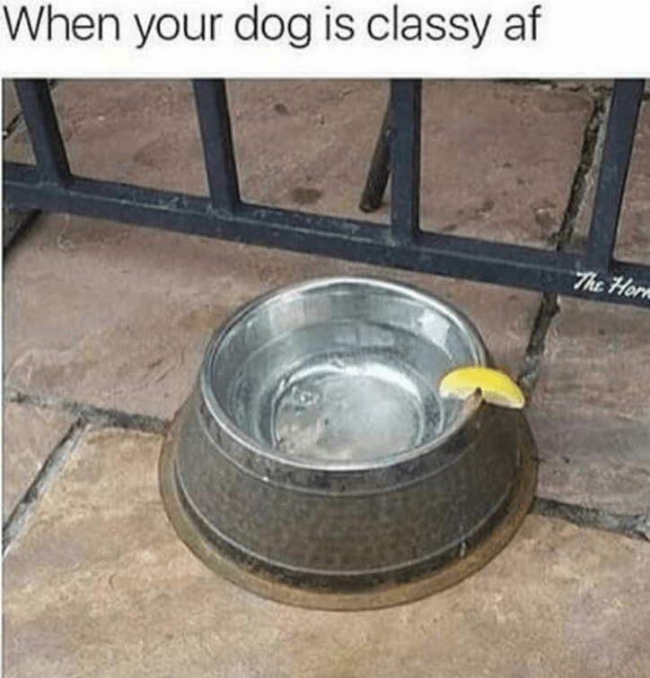 Water - When your dog is classy af The Hor