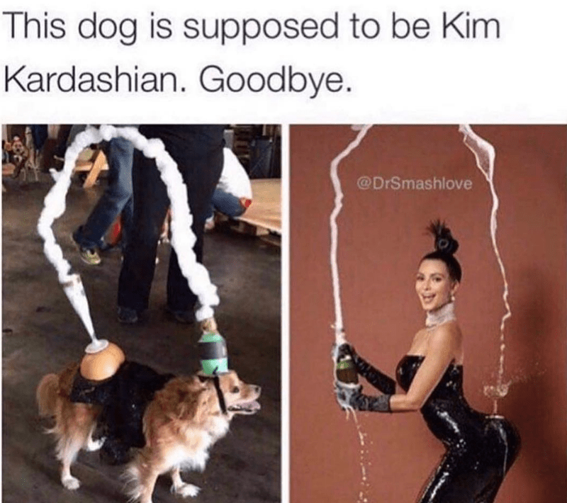 Human - This dog is supposed to be Kim Kardashian. Goodbye. @DrSmashlove