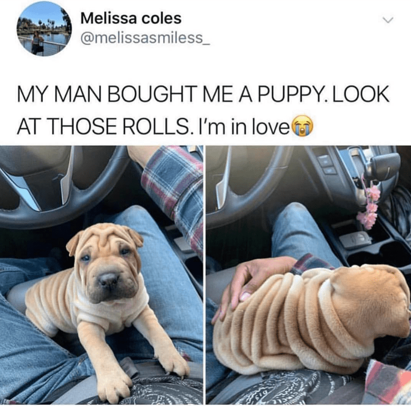 Dog - Melissa coles @melissasmiless MY MAN BOUGHT ME A PUPPY. LOOK AT THOSE ROLLS. I'm in love SLE