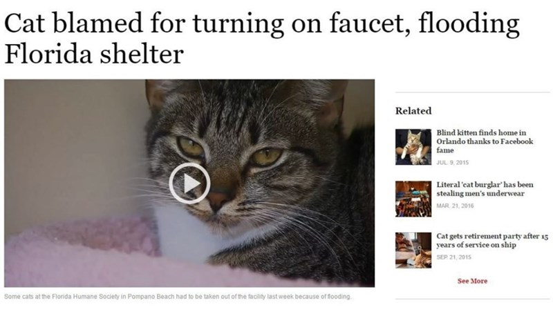 Cat - Cat blamed for turning on faucet, flooding Florida shelter Related Blind kitten finds home in Orlando thanks to Facebook fame JUL 9, 2015 Literal 'cat burglar has been stealing men's underwear MAR 21, 2016 Cat gets retirement party after 15 years of service on ship SEP 21, 2015 See More Some cats at the Florida Humane Society in Pompano Beach had to be taken out of the facility last week because of flooding.