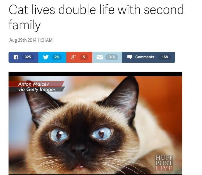 Cat - Cat lives double life with second family Aug 29th 2014 11:01AM 325 28 316 Comments 168 Anton Malcev via Getty Images HUFF POST LIVE