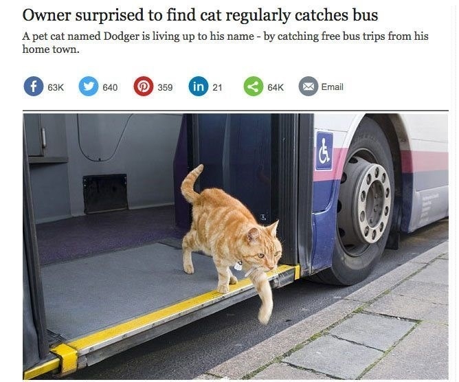 Cat - Owner surprised to find cat regularly catches bus A pet cat named Dodger is living up to his name - by catching free bus trips from his home town. f63K in 21 64K 359 Email 640