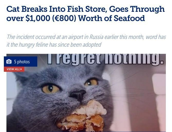 Cat - Cat Breaks Into Fish Store, Goes Through over $1,000 (€800) Worth of Seafood The incident occurred at an airport in Russia earlier this month, word has it the hungry feline has since been adopted Iregrethoting. 5 photos VIEW ALL