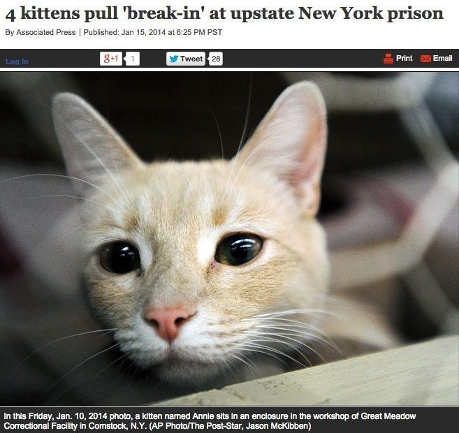 Cat - 4 kittens pull 'break-in' at upstate New York prison By Associated Press Published: Jan 15, 2014 at 6:25 PM PST 8+1 1 Tweet 28 Print Email Log In In this Friday, Jan. 10, 2014 photo, a kitten named Annie sits in an enclosure in the workshop of Great Meadow Correctional Facility in Comstock, N.Y. (AP Photo/The Post-Star, Jason McKibben)