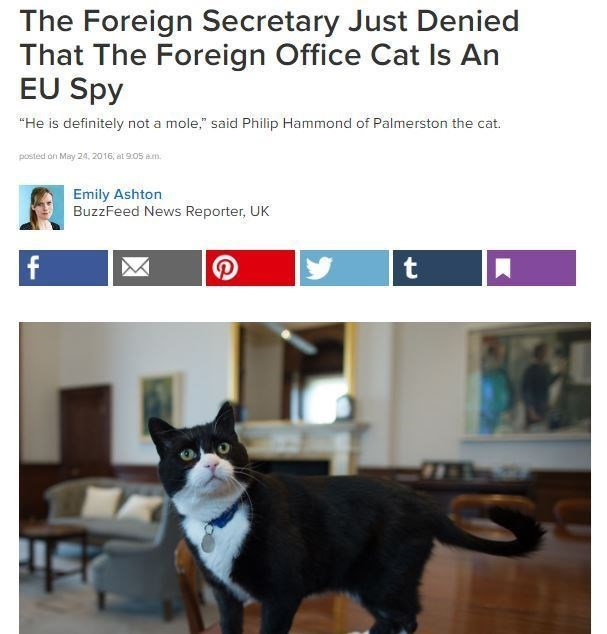 """Cat - The Foreign Secretary Just Denied That The Foreign Office Cat Is An EU Spy """"He is definitely not a mole,"""" said Philip Hammond of Palmerston the cat. posted on May 24, 2016, at 905 am Emily Ashton BuzzFeed News Reporter, UK f t"""
