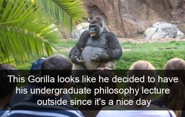 Vertebrate - This Gorilla looks like he decided to have his undergraduate philosophy lecture outside since it's a nice day