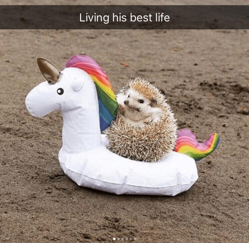 Llama - Living his best life