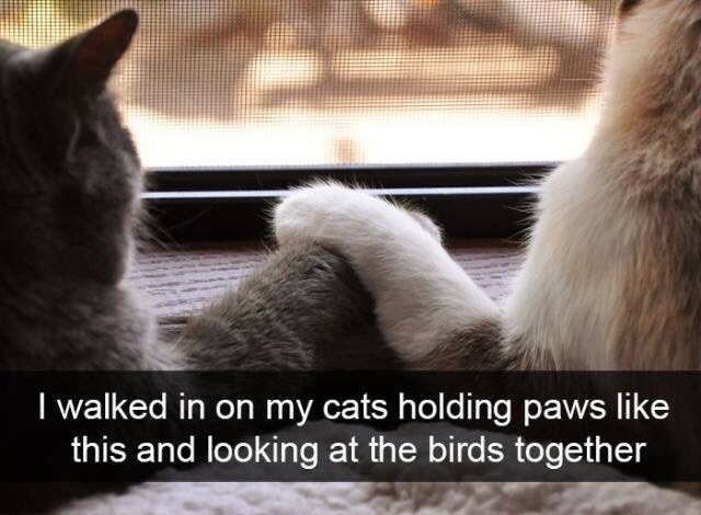 Cat - I walked in on my cats holding paws like this and looking at the birds together