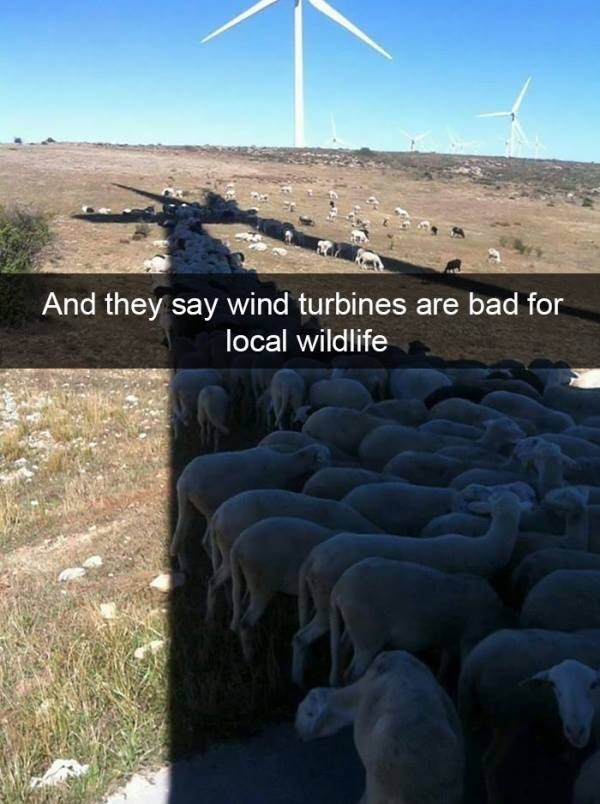 Sky - And they say wind turbines are bad for local wildlife