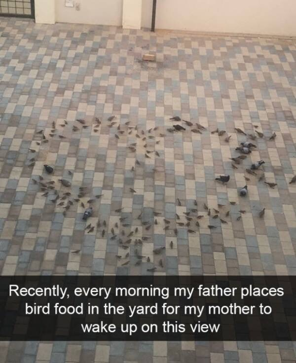Floor - Recently, every morning my father places bird food in the yard for my mother to wake up on this view