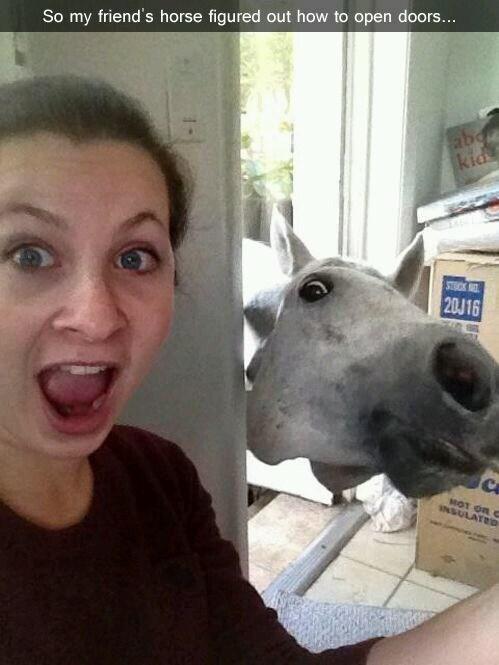 Face - So my friend's horse figured out how to open doors... abd kid STOCK 20J16 MOT OR G INSULATRD