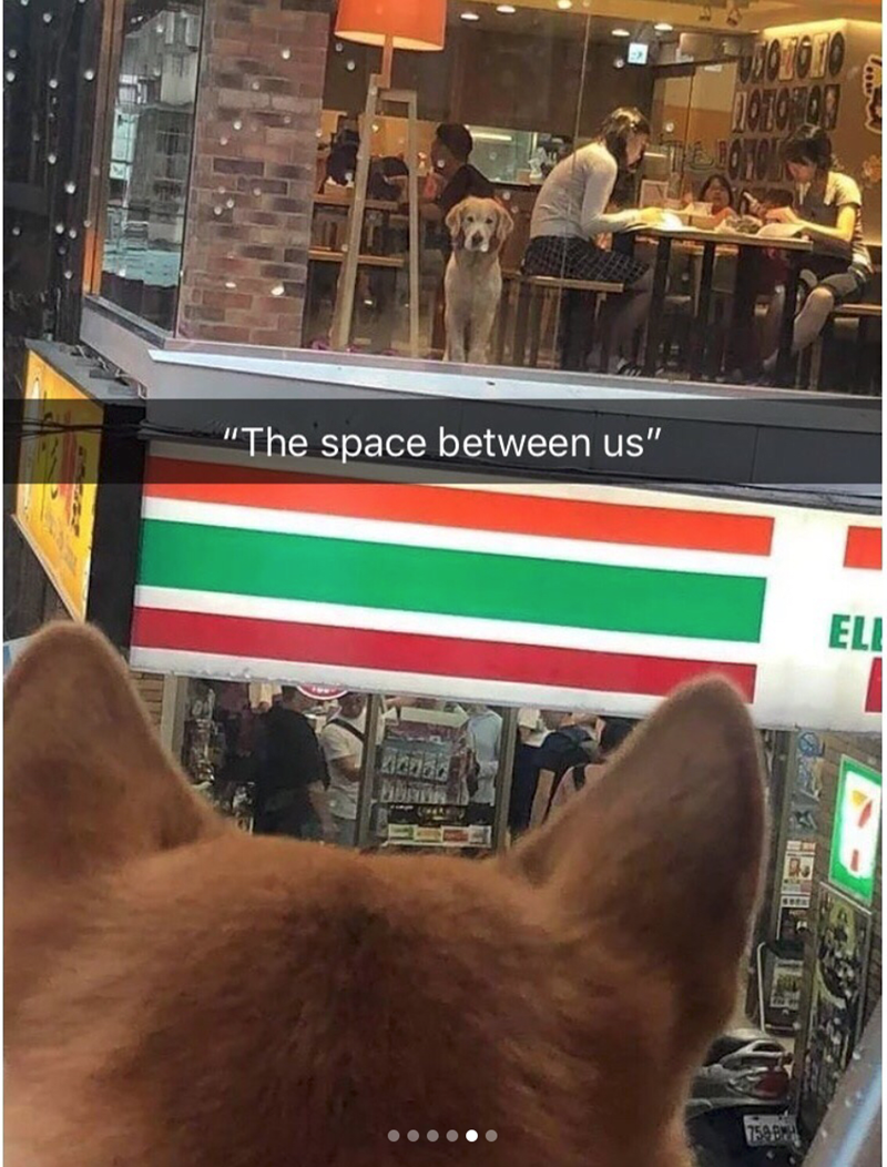 """Canidae - """"The space between us"""" EL inad"""