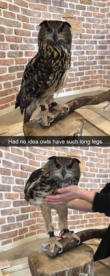 Bird - Had no idea owls have such long legs