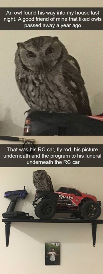 Tire - An owl found his way into my house last night. A good friend of mine that liked owls passed away a year ago. That was his RC car, fly rod, his picture underneath and the program to his funeral underneath the RC car VOLCANO