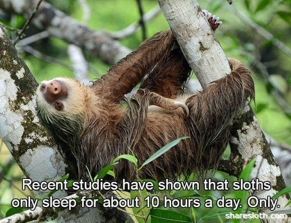 Vertebrate - Recent studies have shown that sloths only sleep for about 10 hours a day. Only sharesloth.com