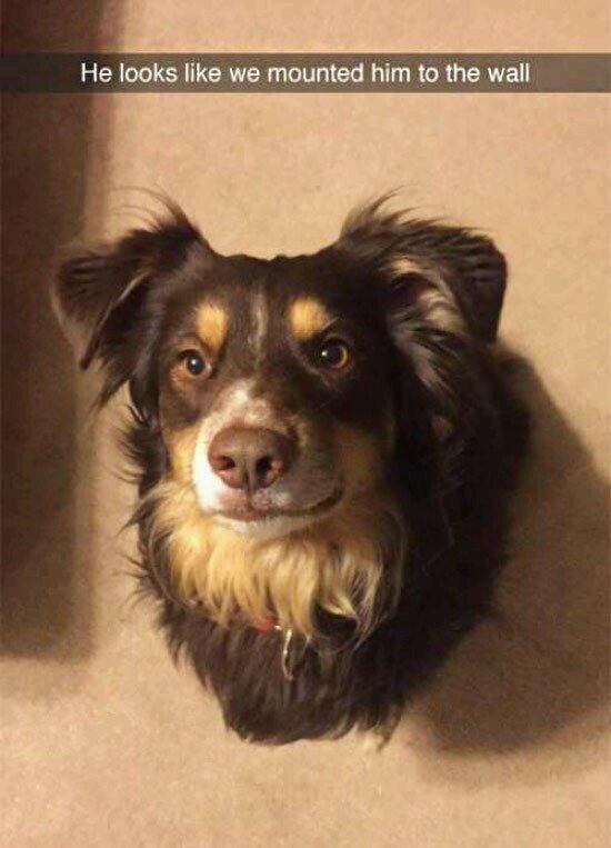 Dog - He looks like we mounted him to the wall